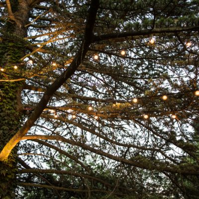 Bore Place, festoon, trees, professional wedding lighting
