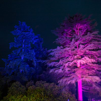 HIghley Manor, professional wedding lighting, trees, blue and purple