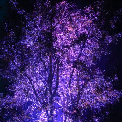 Professional wedding lighting, trees, purple