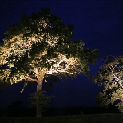 professional wedding lighting, trees, neutral colours
