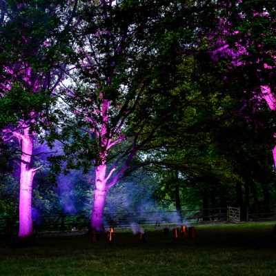 professional wedding lighting, festival, trees